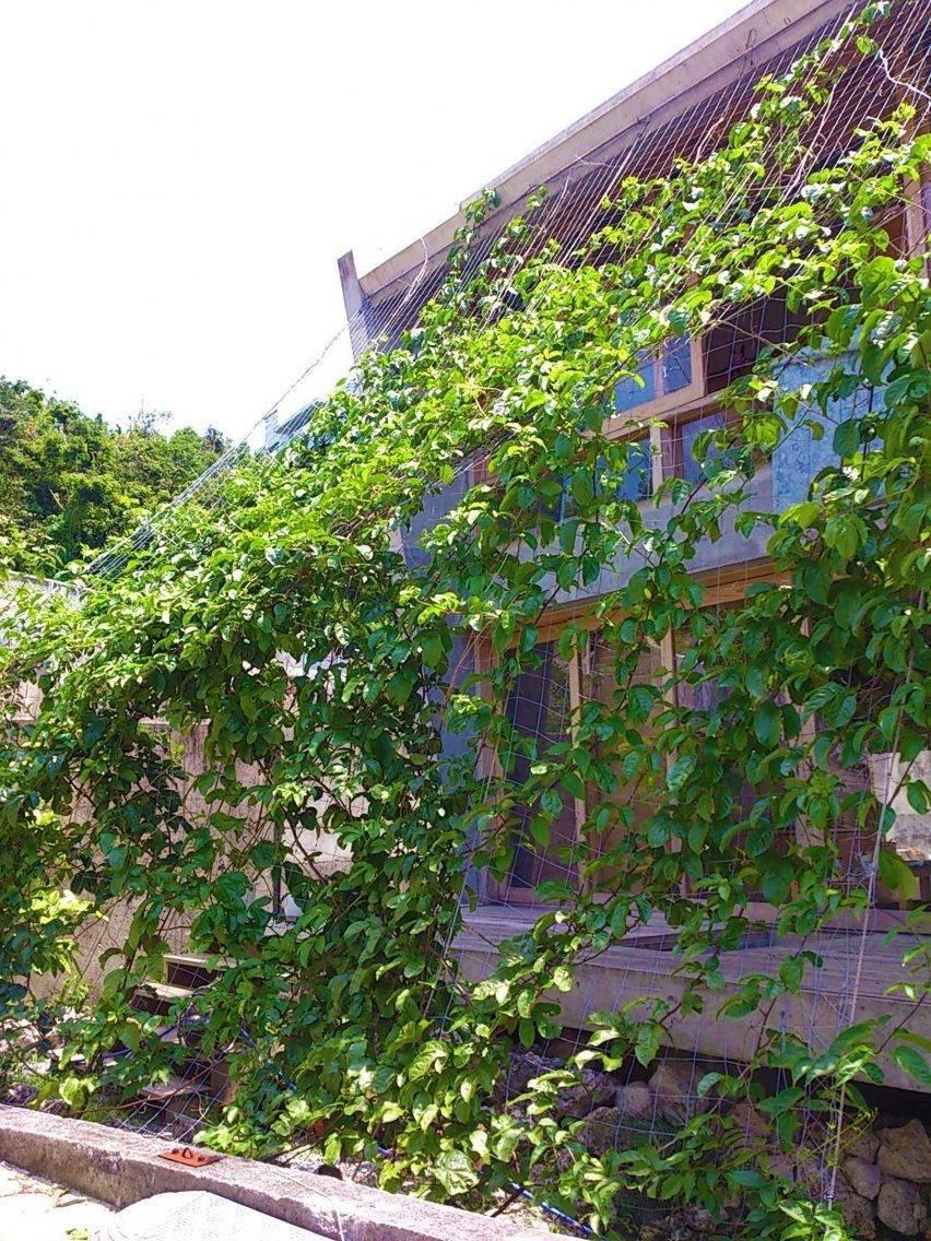 Thêm cây xanh vừa che nắng vừa giúp làm mát cho ngôi nhà