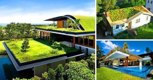 Trồng cây trên mái nhà, mái tôn chống nóng hiệu quả